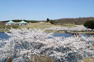 【米山町エリア】平筒沼ふれあい公園
